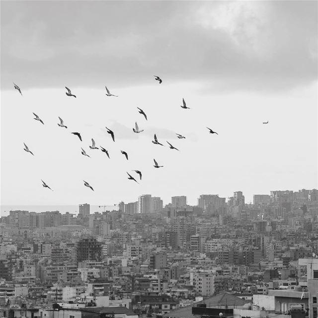Let your dreams take you away... lebanon beirut ... (Baabda)