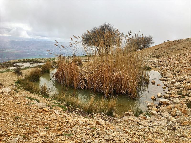 When you love nature, it directly offers its ❤️. R.T. ...........……………………... (West Bekaa- Aana)