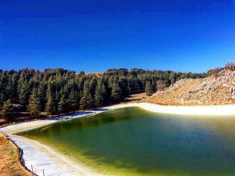 Here to the artificial lakes at our lovely cedars ❤️ GoodMorning Lebanon☀️ (Barouk Cedar Forest)