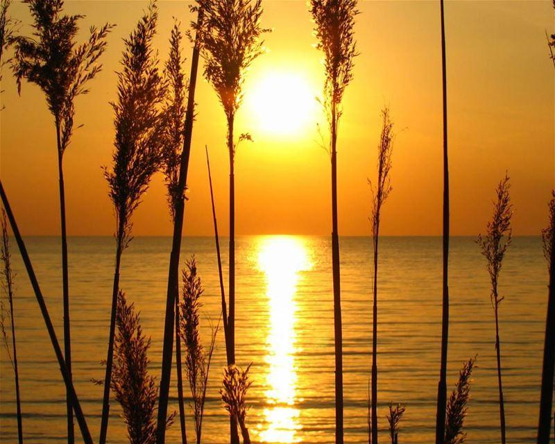 proudlylebanese livelovelebanon livelovebeirut lebanon lebanon_hdr ... (Amchit)