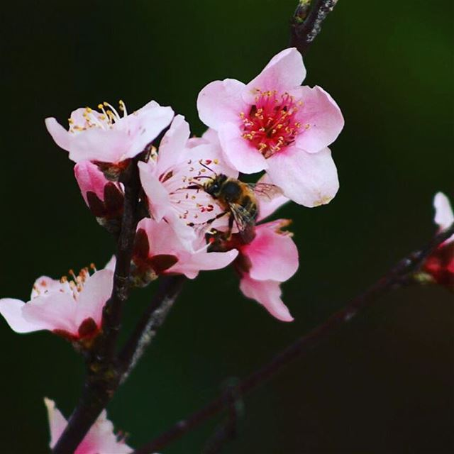 The bee is more honored more than other animals, not because she labors,... (Aley)
