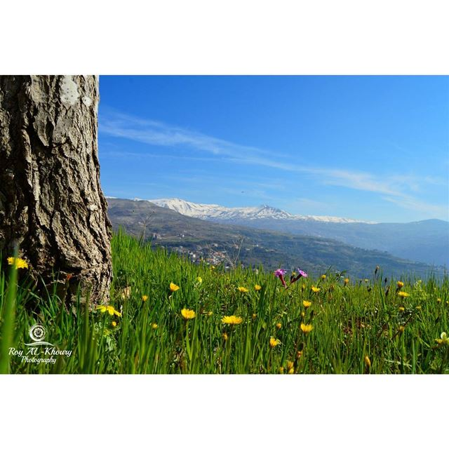 RoyALKhouryPhotography liveloveehden ehden spring flowerstagram ... (Ehden, Lebanon)