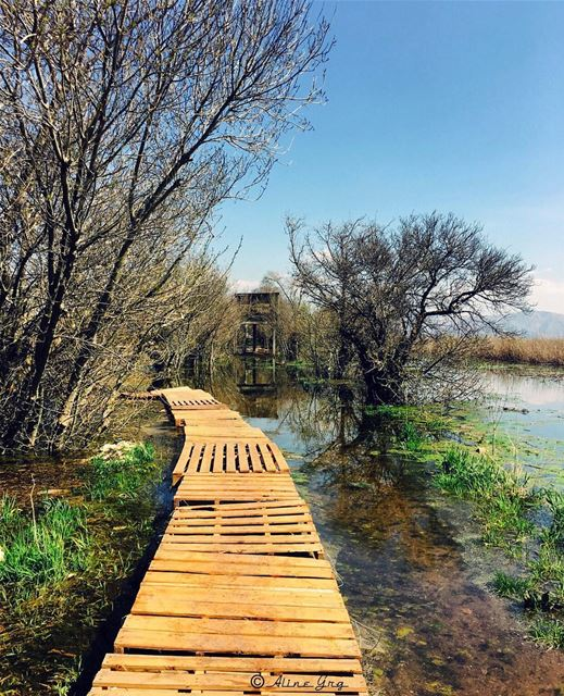 There is no APP for this .. 💚 ammiq  ammiqwetlands  wetland  nature ... (`Ammiq, Béqaa, Lebanon)