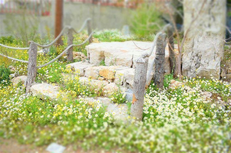 أقبل الربيع، ولكنك لم تُقبِل،أقبل الربيع ولكنك لم تأتي معه، منذ زمن... (Chouf)