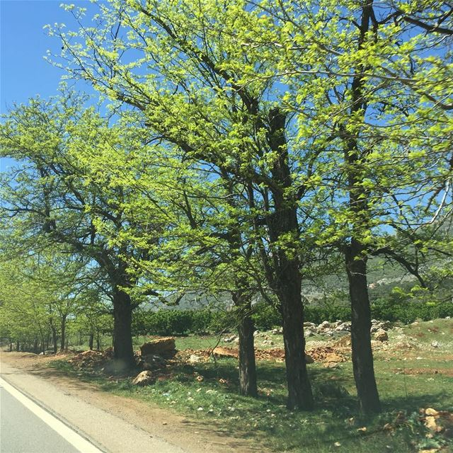 Hello spring ! Perfect weather this weekend for a daytrip ☀️☀️Head... (`Ammiq, Béqaa, Lebanon)