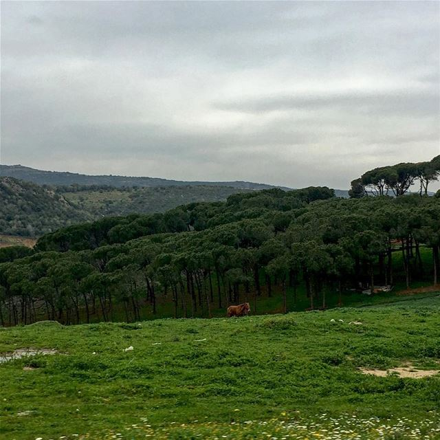 Alone in the Wild beautiful_lebanon livelovelebanon lebanonspotlights ... (Nabatîyé)