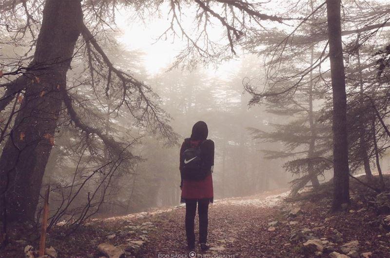 F O G 🌫 bobsadekphotography lebanoninapicture weekend woods forest ... (Barouk Cedar Forest)