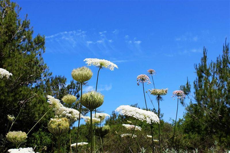 """زهور نيسان (📸"""" لبنان 24"""") Lebanon Spring Flowers April Nature ..."""