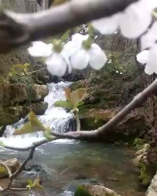 Great time for outdoors spring  blossom  stream  River  waterfall  flower...