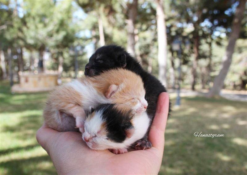 Welcome newborn kittens 😊مجموعة جديده cat livelovelife ...