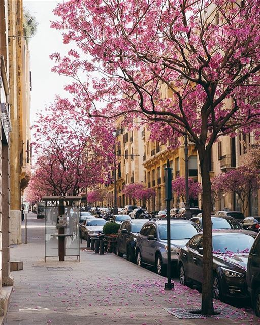 This is how Beirut steals your heart away 🌸🌸🌸 beirut downtown city ... (Downtown Beirut)