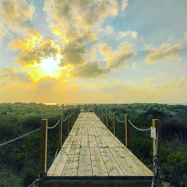 tyre tyr tyrecity sourcity tyrepage southlebanon beach ... (Tyre Coast Nature Reserve - محمية شاطئ صور الطبيعية)