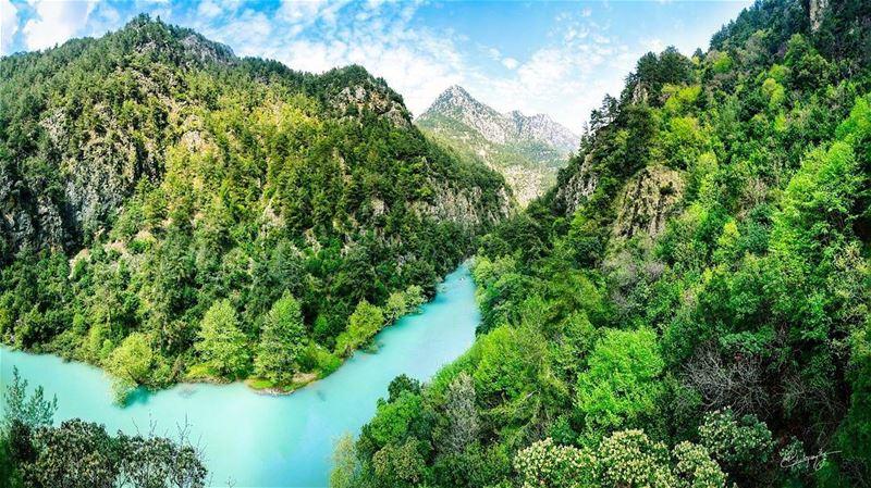 the view lake forest lebanon green nature snapshot photo photos ... (Chouwen Lake)
