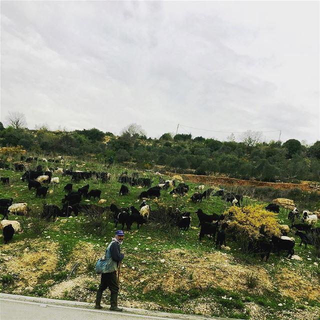 Good Morning from the Old Shepherd n me beautiful_lebanon ... (Nabatîyé)
