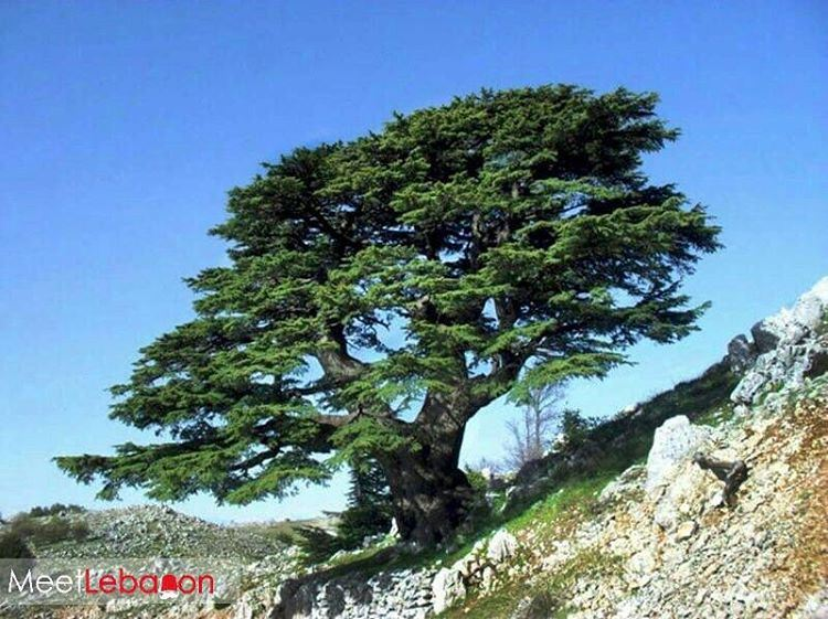 3000 years of history in one picture! Good morning beautiful lebanon... (Barouk Cedar Forest)