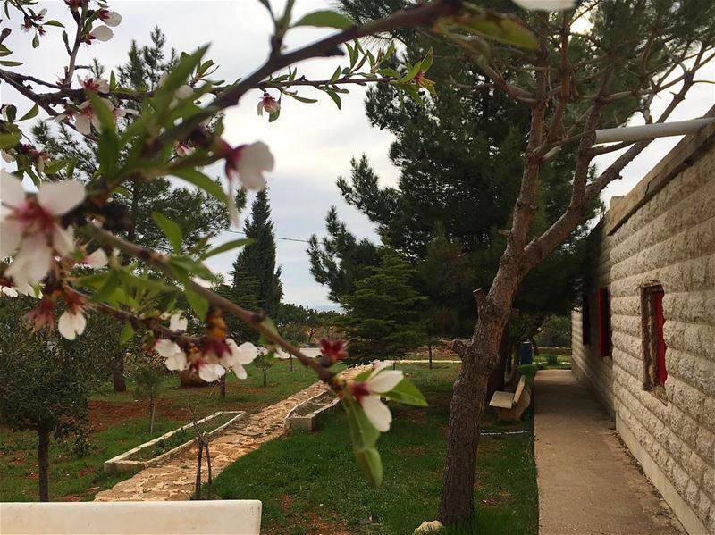 Bloom where you are planted 🌸 spring positivevibes livelovelebanon... (Yanta)