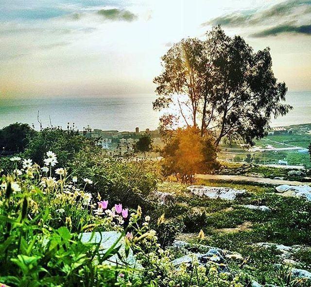 Colors of Spring in Batroun الربيع يطل بألوانه على البترون Photo taken... (Batroûn)