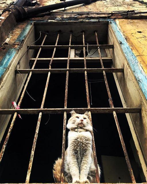 I like your CATTITUDE photooftheday streetphotography cat animals ... (Beirut, Lebanon)