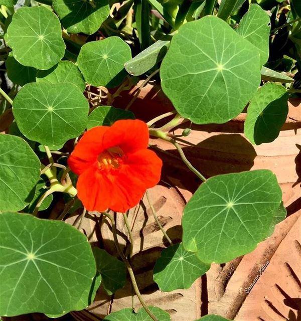 flower orange green spring today lebanon ...