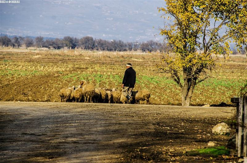A simple life is a beautiful life ✌✌ life simple bekaa west shepherd ... (`Ammiq, Béqaa, Lebanon)