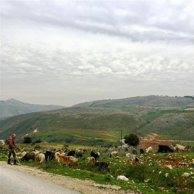 The younger Shepherd beautiful_lebanon livelovelebanon ... (Nabatîyé)