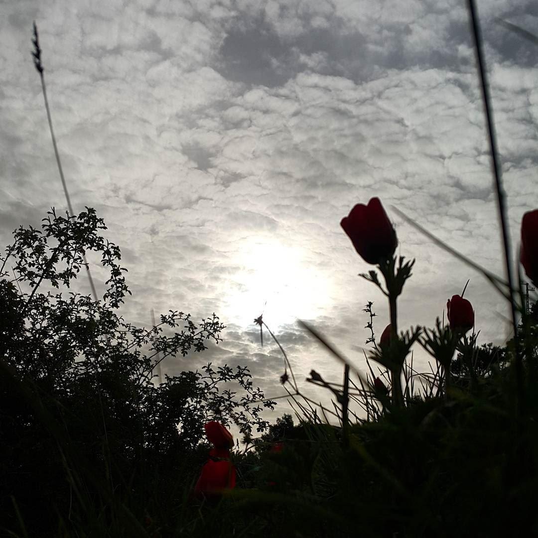 morning clouds skyline sky skylovers sunrise silouette ...