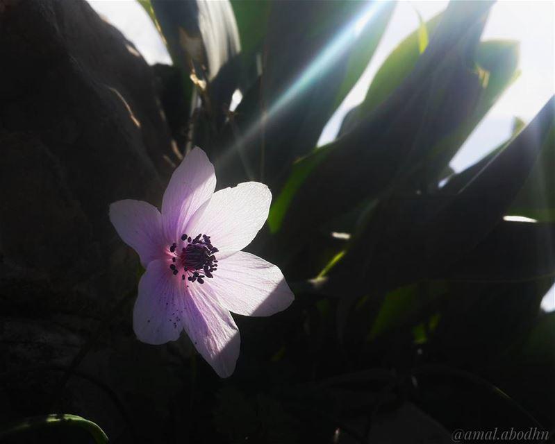 النباتات لا تملك العقل ومع هذا تخرج من الثقوب متتبعة للضوء،، فما بالنا لا ت