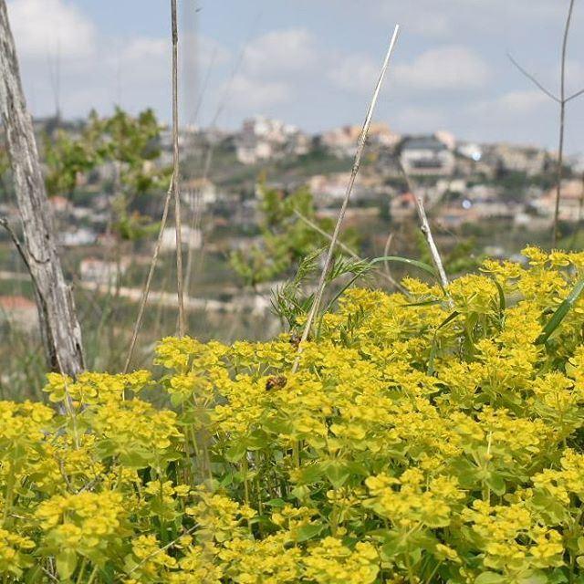 هوا الجنوب whatsuplebanon ig_lebanon insta_lebanon southlebanon ... (El Qlaïaâ, Al Janub, Lebanon)