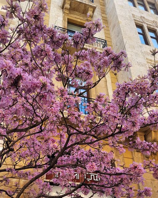 Cannot get enough of the Spring beauty photooftheday instamood ... (Beirut, Lebanon)