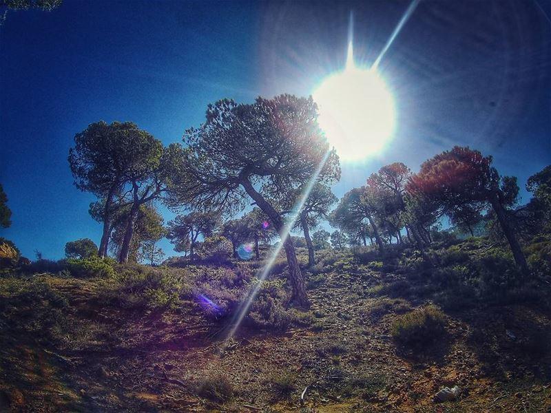 Some sunrises are like Hellos from God ☉ trees livelovelebanon ... (Baskinta, Lebanon)