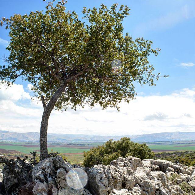 loves_lebanon super_lebanon ig_lebanon lebanonbyalocal ... (`Ammiq, Béqaa, Lebanon)