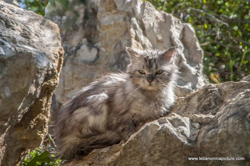 What you're looking at? lebanoninapicture lebanon cats lebanoncats ... (Safra, Lebanon)