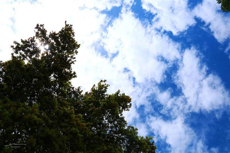 Laydown and look up ☉⛅ (TAFLA)