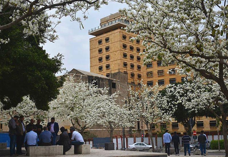 بيروت الجمال الحضارة الثقافة والعلم ig_lebanon insta_lebanon Lebanon ... (Beirut, Lebanon)