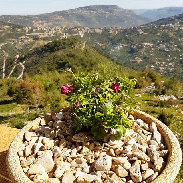Good morning spring ! Good morning sunshine ! tourlebanon tourleb ... (Bkechtîne, Mont-Liban, Lebanon)