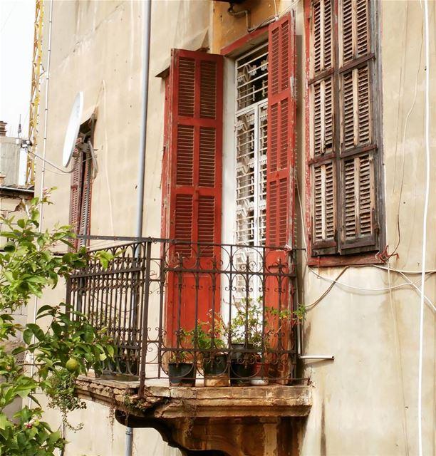 A lonely lemony balcony 🍋 🌿 ...