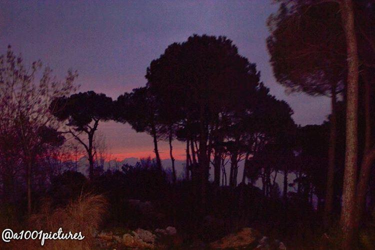 nature forest dark nikon photography night travel discover ... (Dhoûr Ech Choueïr, Mont-Liban, Lebanon)