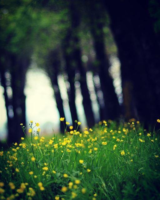 Good morning☀️☀️ beauty nature green spring livelovelebanon ...