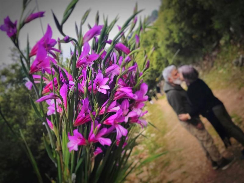 Love  ❤️  💏...  kiss  couple  flower  flowers  spring  kiss  purple ... (Deir Kfifan)