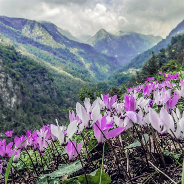 The hills are alive Easter spring peaks valley flowers cyclamen ...