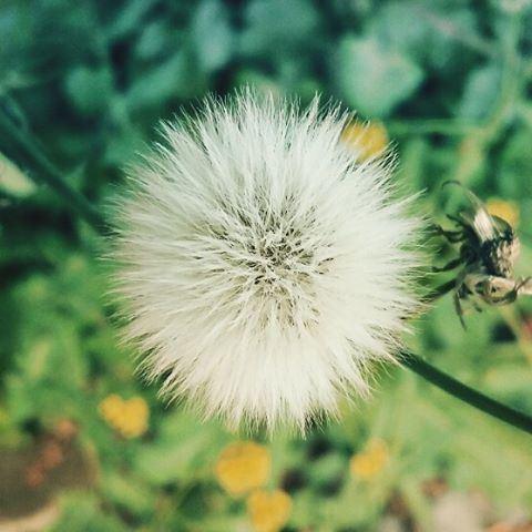 flowers flowerlovers springflowers blowinthewind inmyway hellospring ...