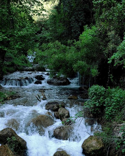 A River Runs Through It. Or rather, dozens of rivers. From roughly... (El Qemmâmîne, Liban-Nord, Lebanon)