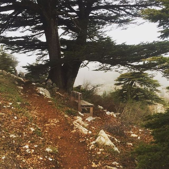 Who moved my bench?? 😡 Lebanon  lebanese  hike  hiking ... (Al Shouf Cedar Nature Reserve)