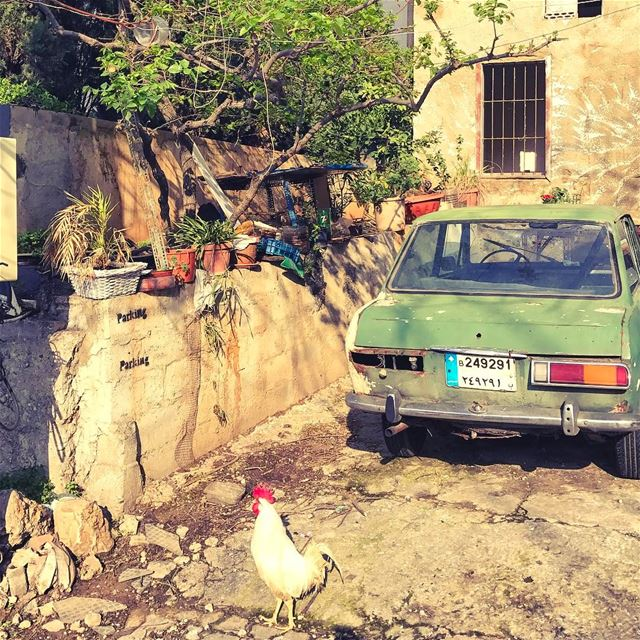 It ain't no morning without 🐓 Lebanon tb travel travelgram traveler... (Beirut, Lebanon)