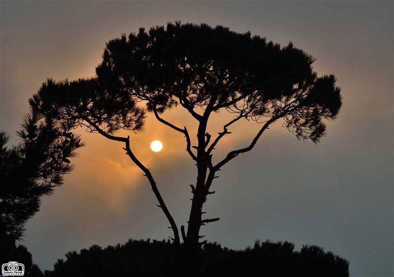 غروب من فوق الضباب - جزين sunset sunsetlebanon lebanonature ...