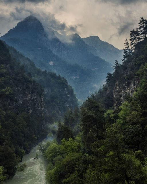 April Rain mountains valley river Forest trees nature rain fog ...