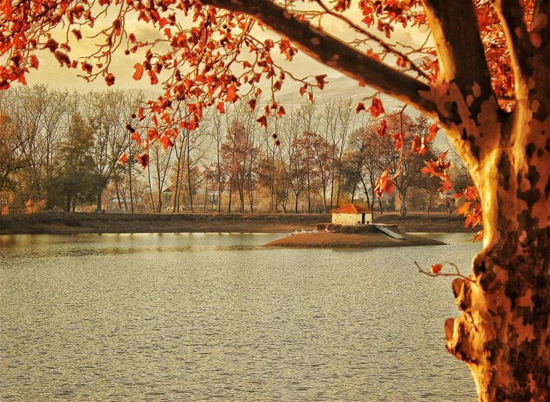 Ducks' tale nature orange color trees tree agriculture farm ... (Bekaa Valley)