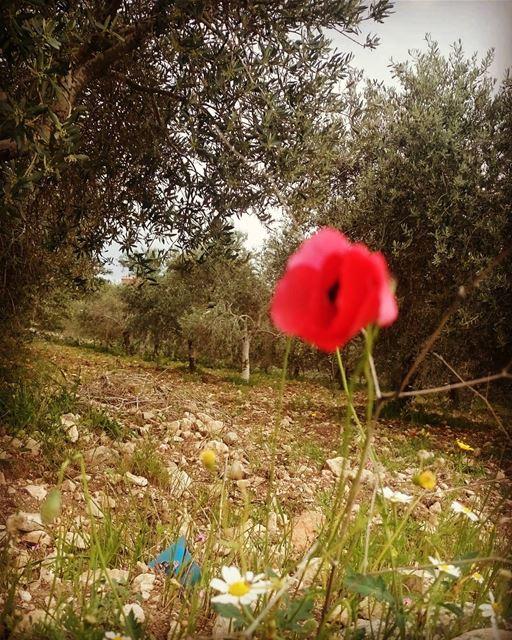 livelovenature naturephotography naturelovers uniqueflowers ...