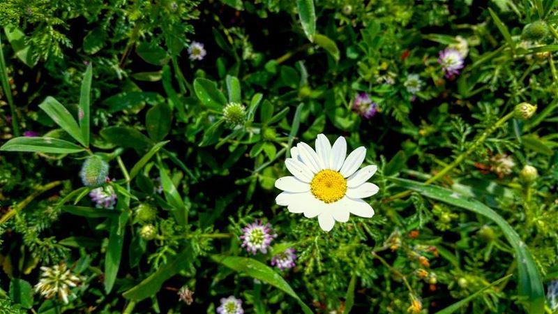 😍🌼💙 springtime spring flower flowers loveflowers love_flowers white...