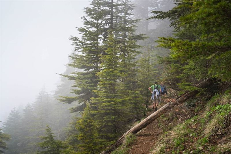 Taking Anghami team for a hike 🤓 vsco ... (Riserva di Horsh Eden)